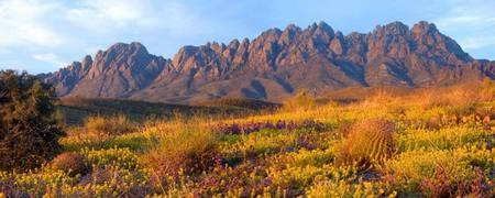 Organ Mountains - New Mexico